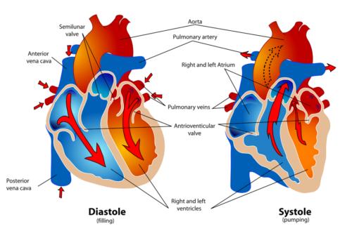 Familiarità per malattie cardiovascolari